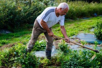 Michel Thévot en plein travail dans le jardin de thé du Moulin de Kérouzéré