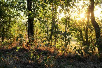 Soleil-couchant dans La Vallée, Sargé-sur-Braye
