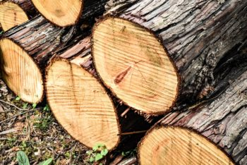 Buches de bois de Cyprès Hinoki