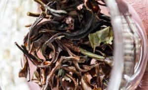 Rinçage des feuilles préalable à la première infusion