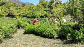 Cueillette de mai au jardin Baekhak