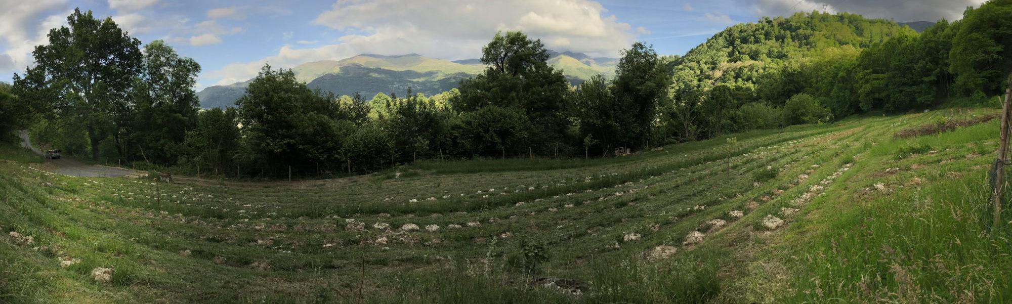 Les Terrasses de l'Arrieulat (panorama) - Thé des Pyrénées
